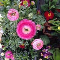 bouquet de fleurs roses photo