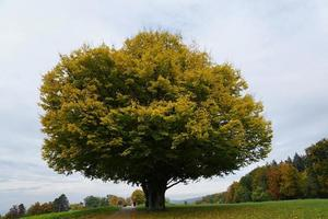 arbre dans un parc à zollikon photo