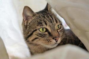 chat derrière le rideau