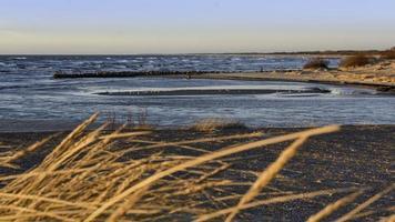 herbe de blé près des eaux de l'océan photo