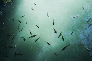 poisson nageant dans l'eau