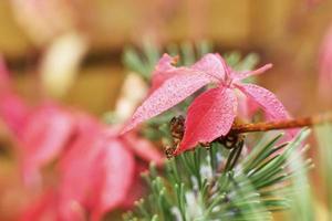 plante à fleurs rouge colorée