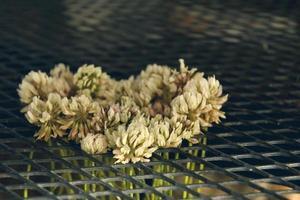 pétales de fleurs vintage