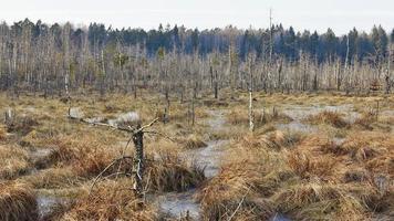 marais près des arbres dans la forêt photo