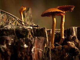 champignons sauvages rustiques