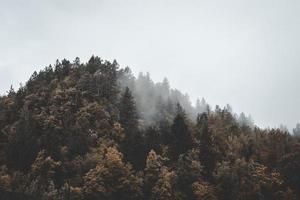 vue aérienne de la forêt sur la montagne