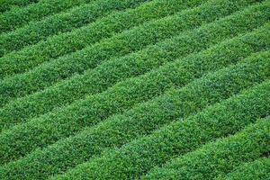 rangées de terres agricoles