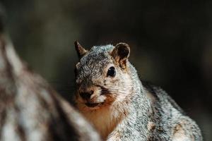 écureuil dans l'arbre