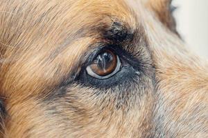 coup de macro d'oeil de chien photo