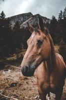 cheval brun debout sur le sol