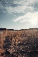 herbe dans le désert