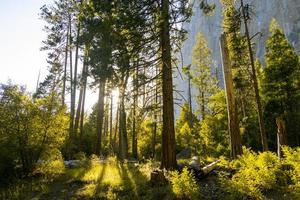 soleil brille à travers les arbres photo