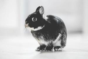 photo de lapin noir et blanc