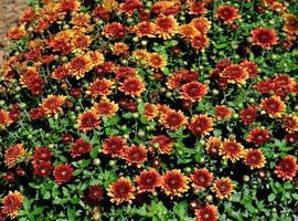 fleurs sauvages colorées