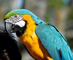 portrait de perroquet ara