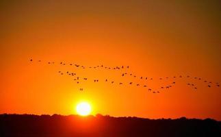 hérons au coucher du soleil