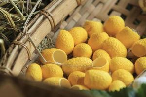 cocon de vers à soie jaune et blanc combiné à l'arrière-plan. photo