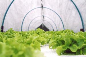 légumes hydroponiques