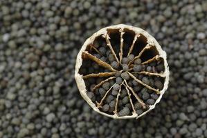 capsule de graines de pavot photo
