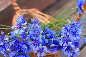 fleurs sauvages sur le terrain photo