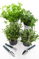 herbes pour la plantation photo