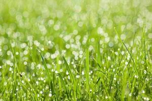 herbe avec des gouttes de rosée photo