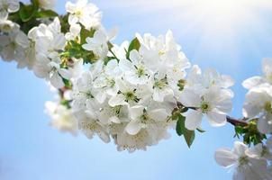 arbre de printemps photo