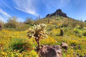 Parc d'État de Picacho Peak photo