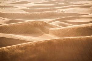 vent dunes dans le désert photo