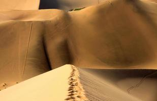 empreintes de pas chinois du désert d'Aksay