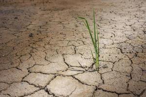 herbe sur sol sec et fissuré