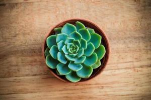 cactus sur fond de bois.