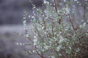 buissons naturels de fleurs sauvages photo