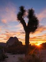 joshua tree coucher de soleil nuage paysage california national park photo
