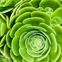 plante succulente photo