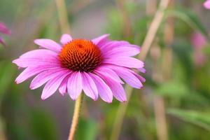 fond floral photo