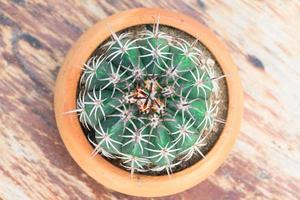 cactus en pot de fleur photo