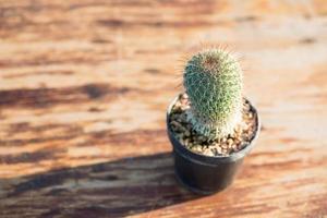 Cactus en pot de fleurs sur table en bois photo