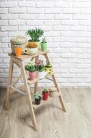 collection de plantes succulentes