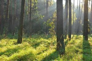 forêt