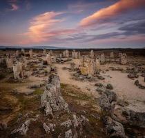 forêt de pierre photo