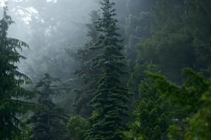forêt mystérieuse photo