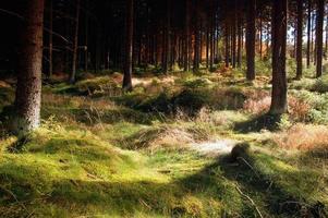 forêt de fées photo
