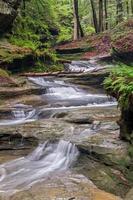 cascade forestière photo