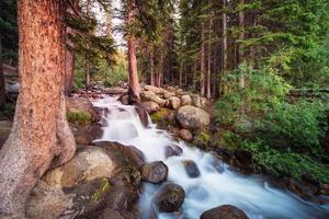 ruisseau forestier photo