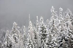 forêt glaciale photo
