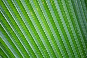 fond de forêt tropicale photo