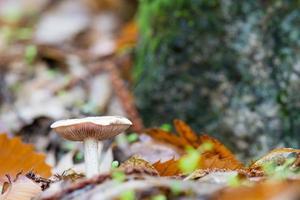 champignons de la forêt de châtaigniers photo