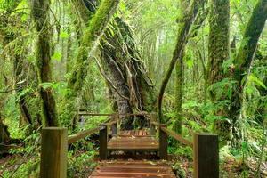 pluie de forêt tropicale photo