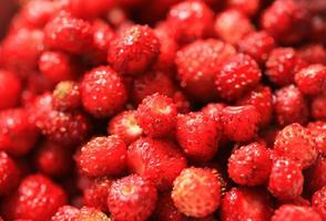 Gros plan de fraise de la forêt photo